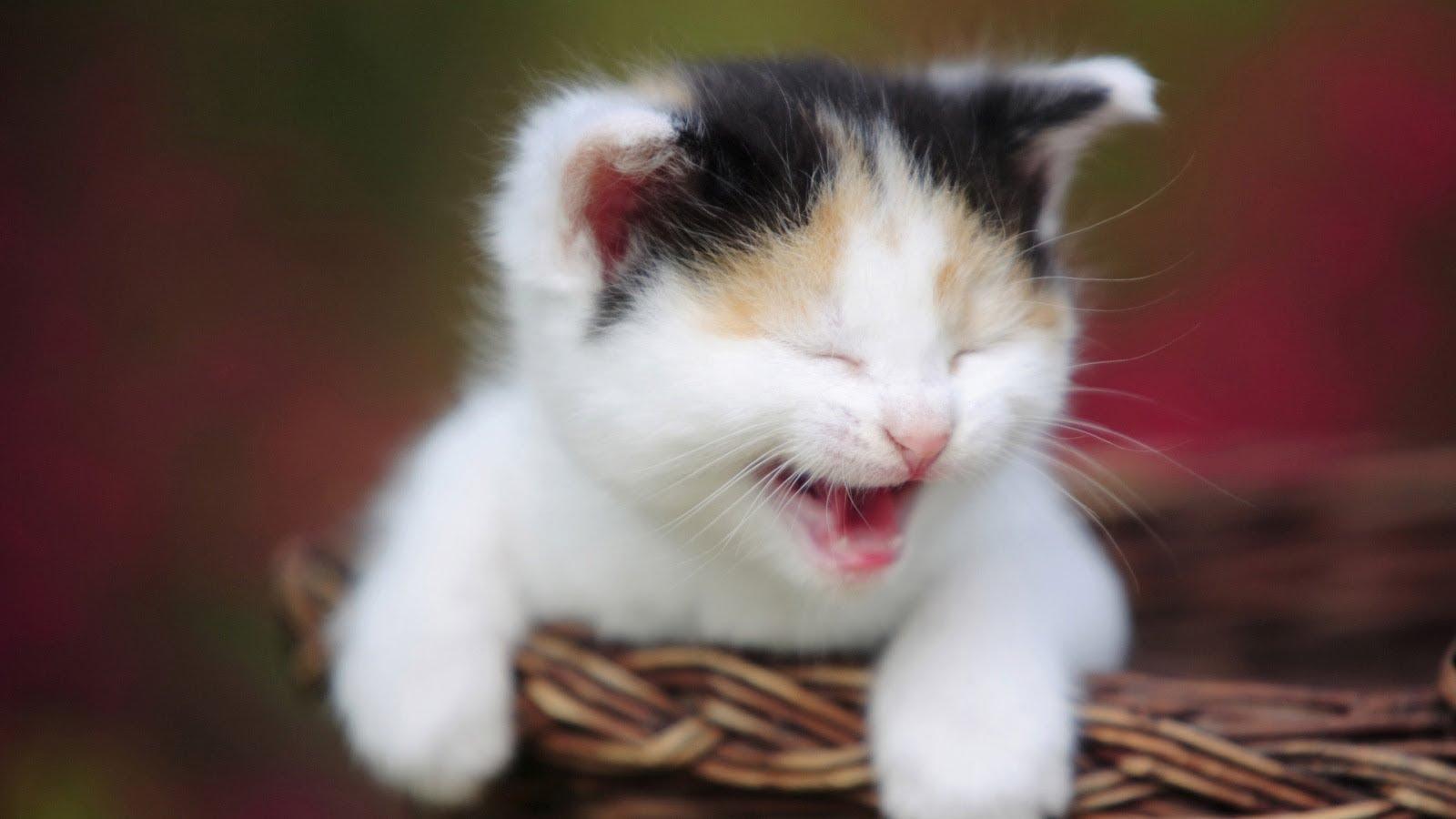 خلفيات قطط كيوت جدا 5