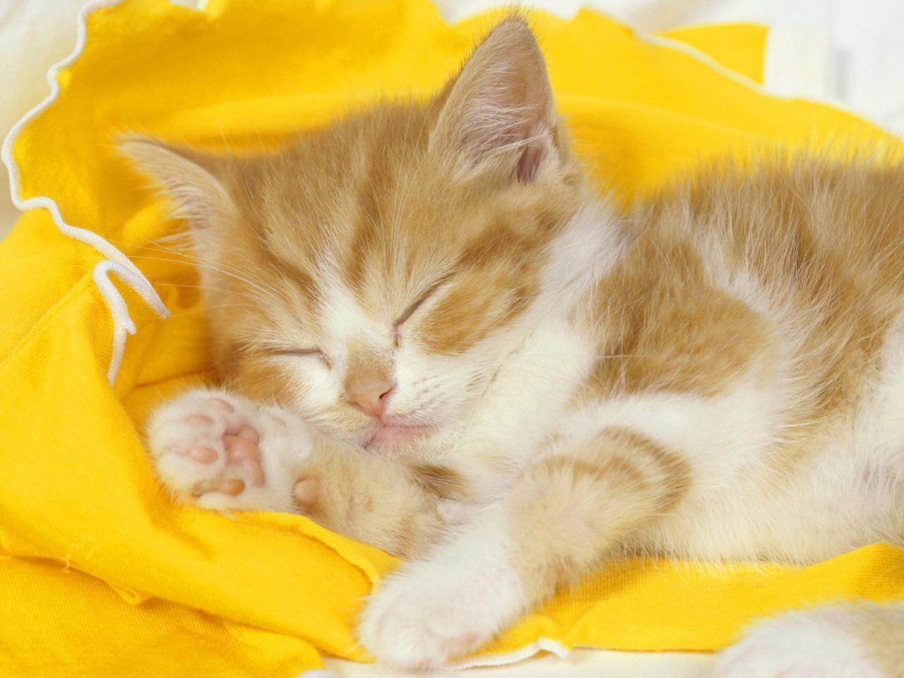 خلفيات قطط كيوت جدا 6