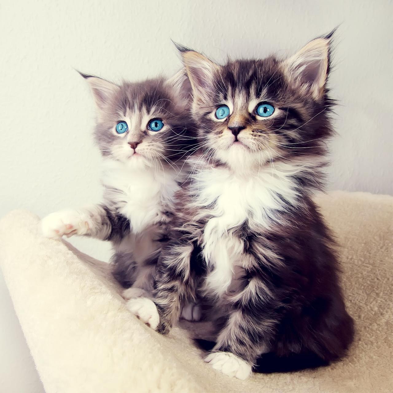 خلفيات قطط كيوت جدا 8