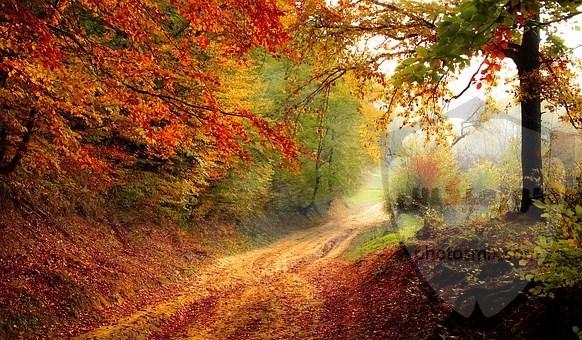 صور طبيعية خلابة أجمل صور للطبيعة صور من الطبيعة الحية 7
