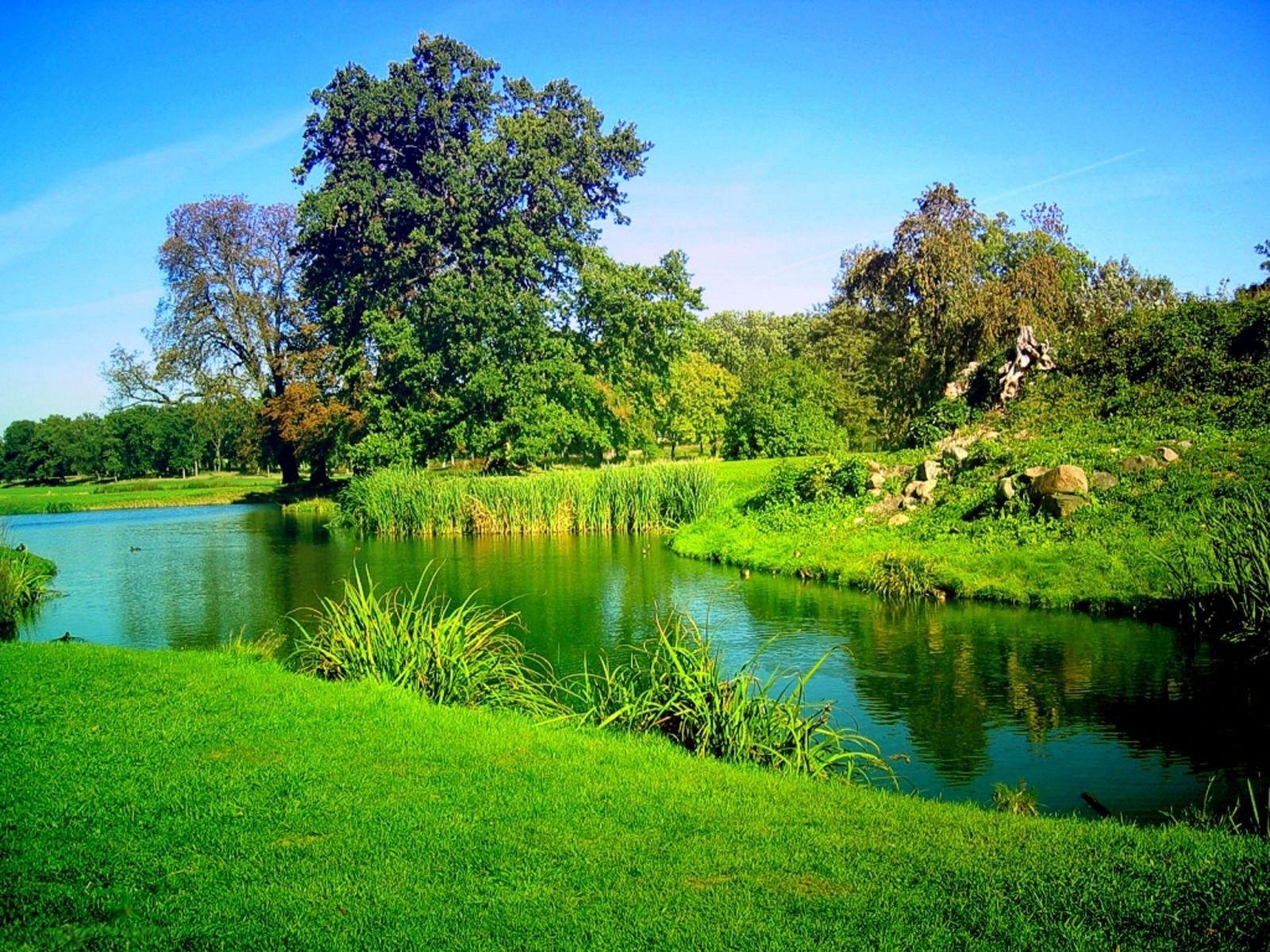 صور غابات جميلة 5