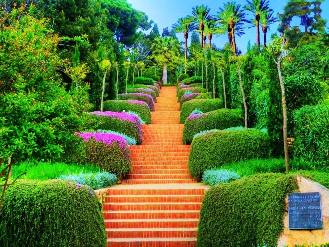 صور غابات جميلة 6