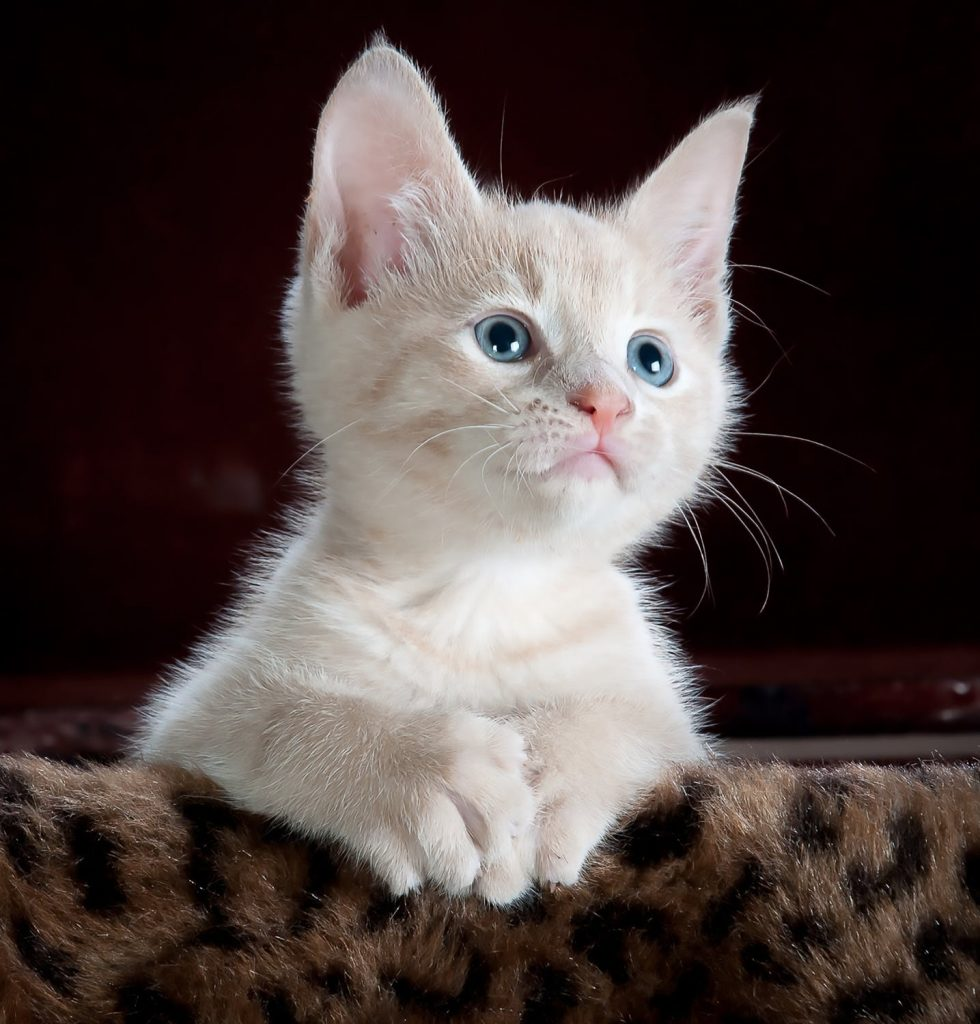 صور قطط جميلة جدا قطط كيوت للفيسبوك 1
