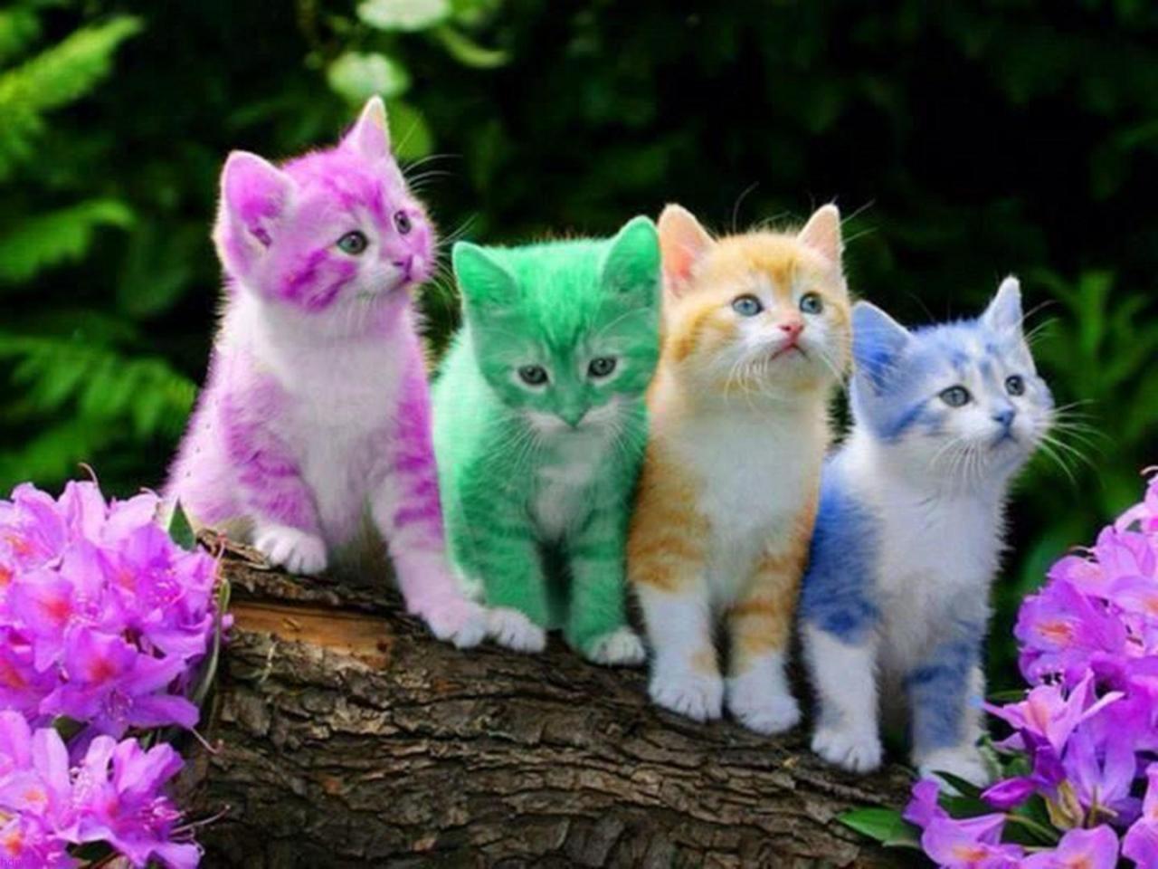 صور قطط 11