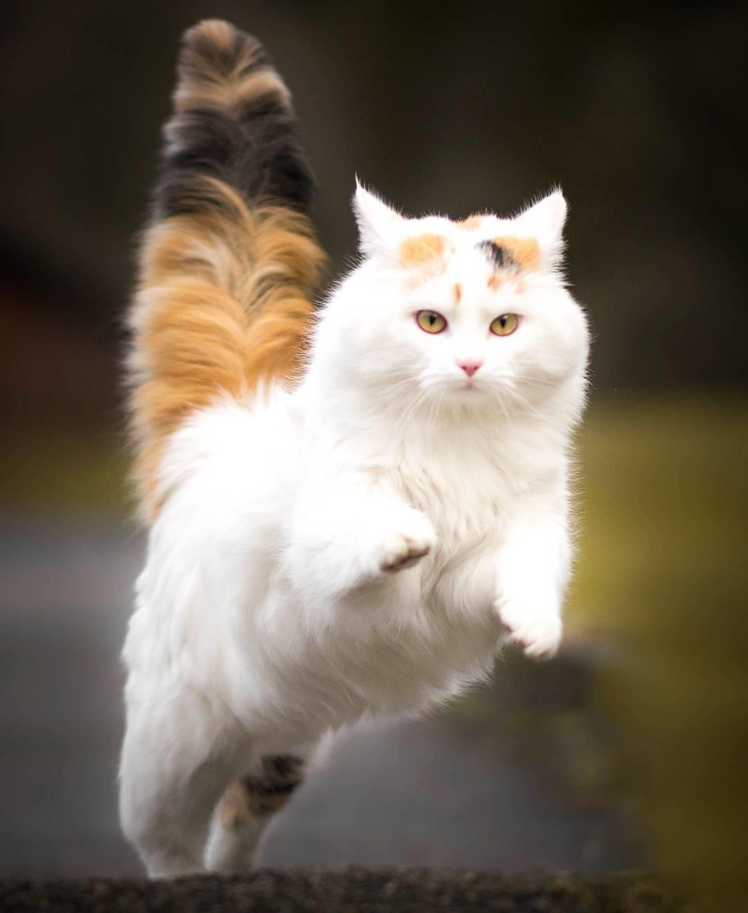 صور قطط 12