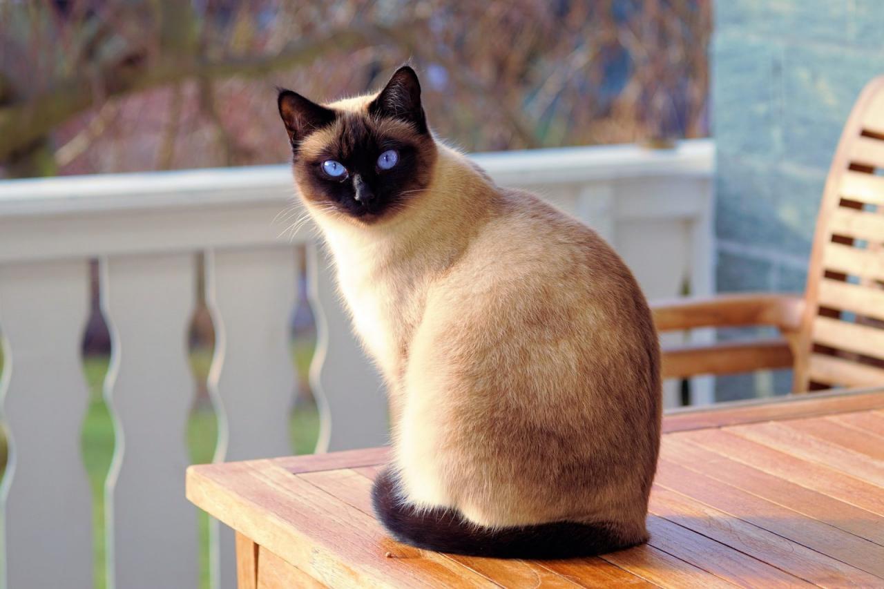 صور قطط 14