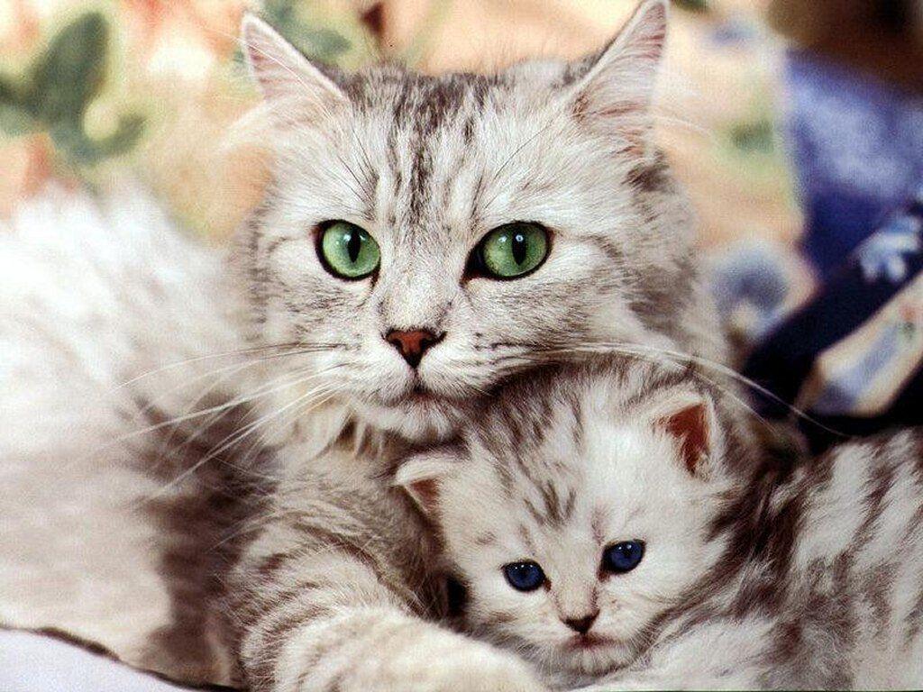 صور قطط 15