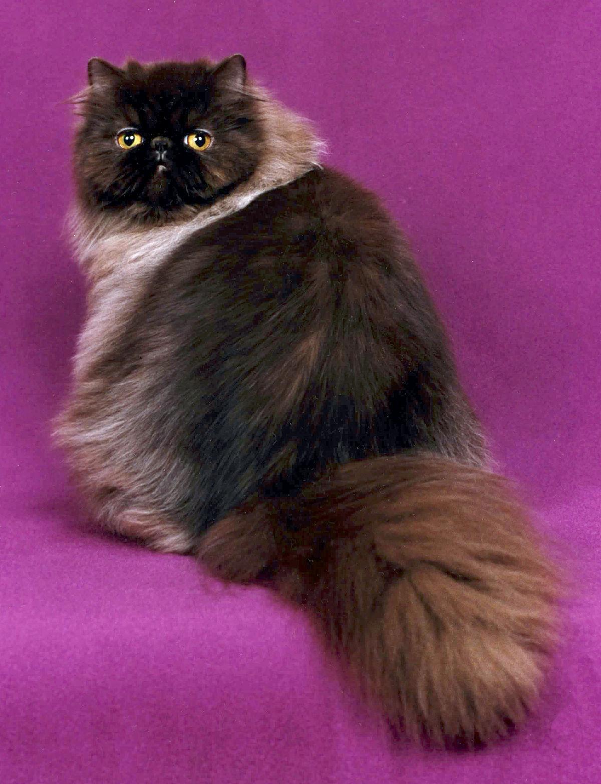 صور قطط 16