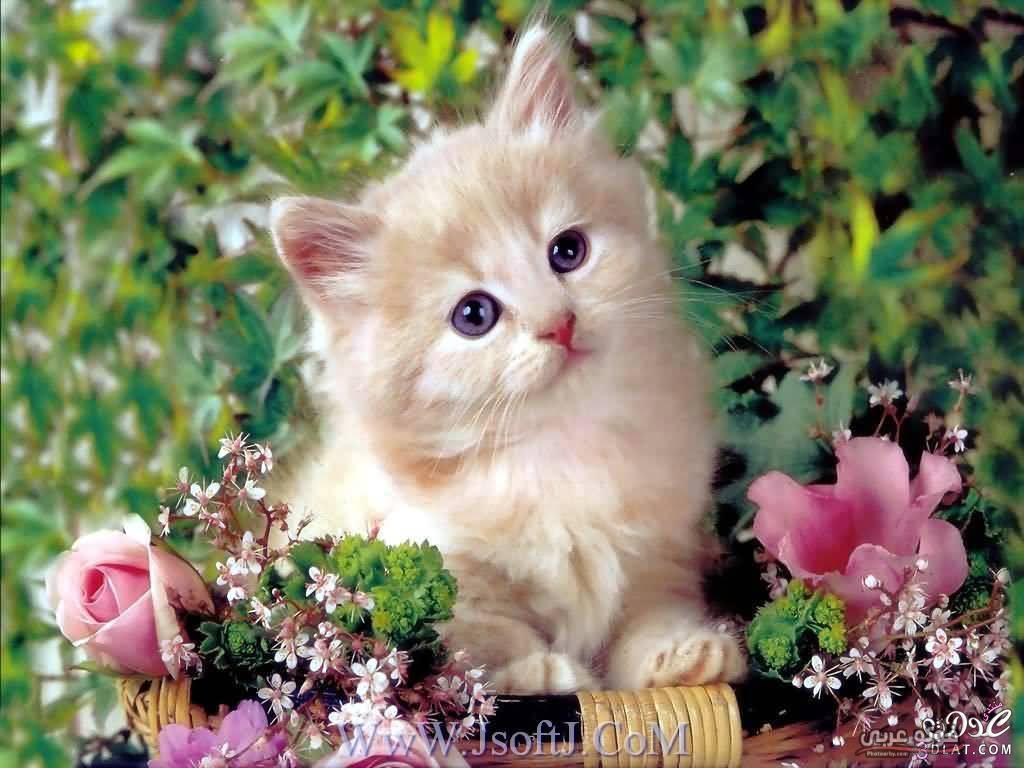 صور قطط 2