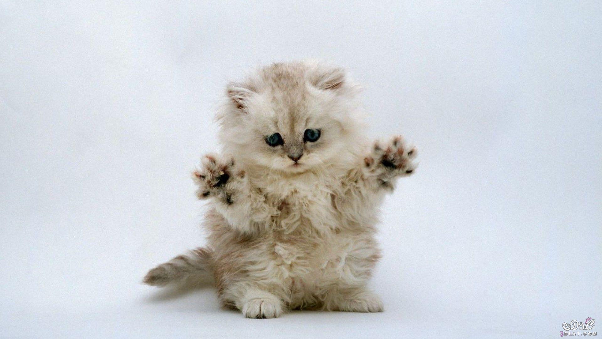 صور قطط 3