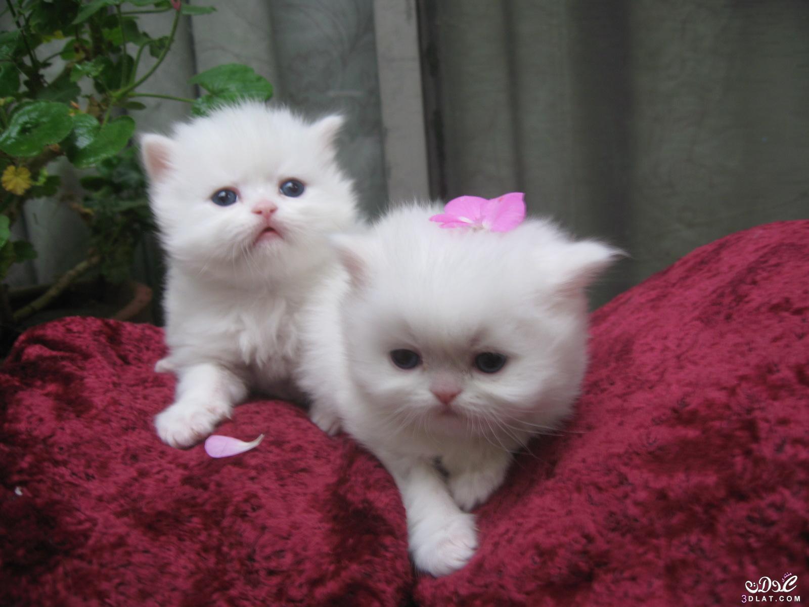 صور قطط 4