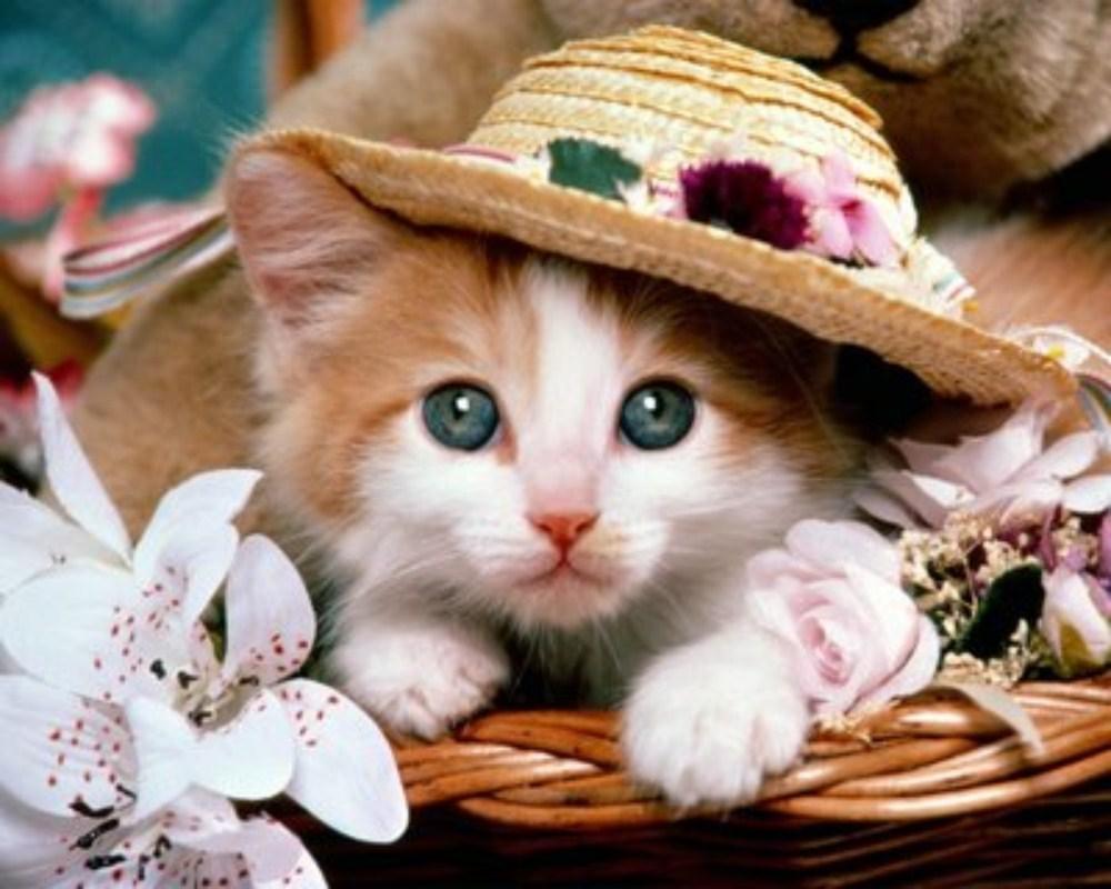 صور قطط 8