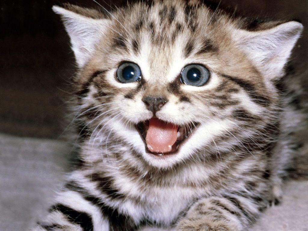 صور قطط 9