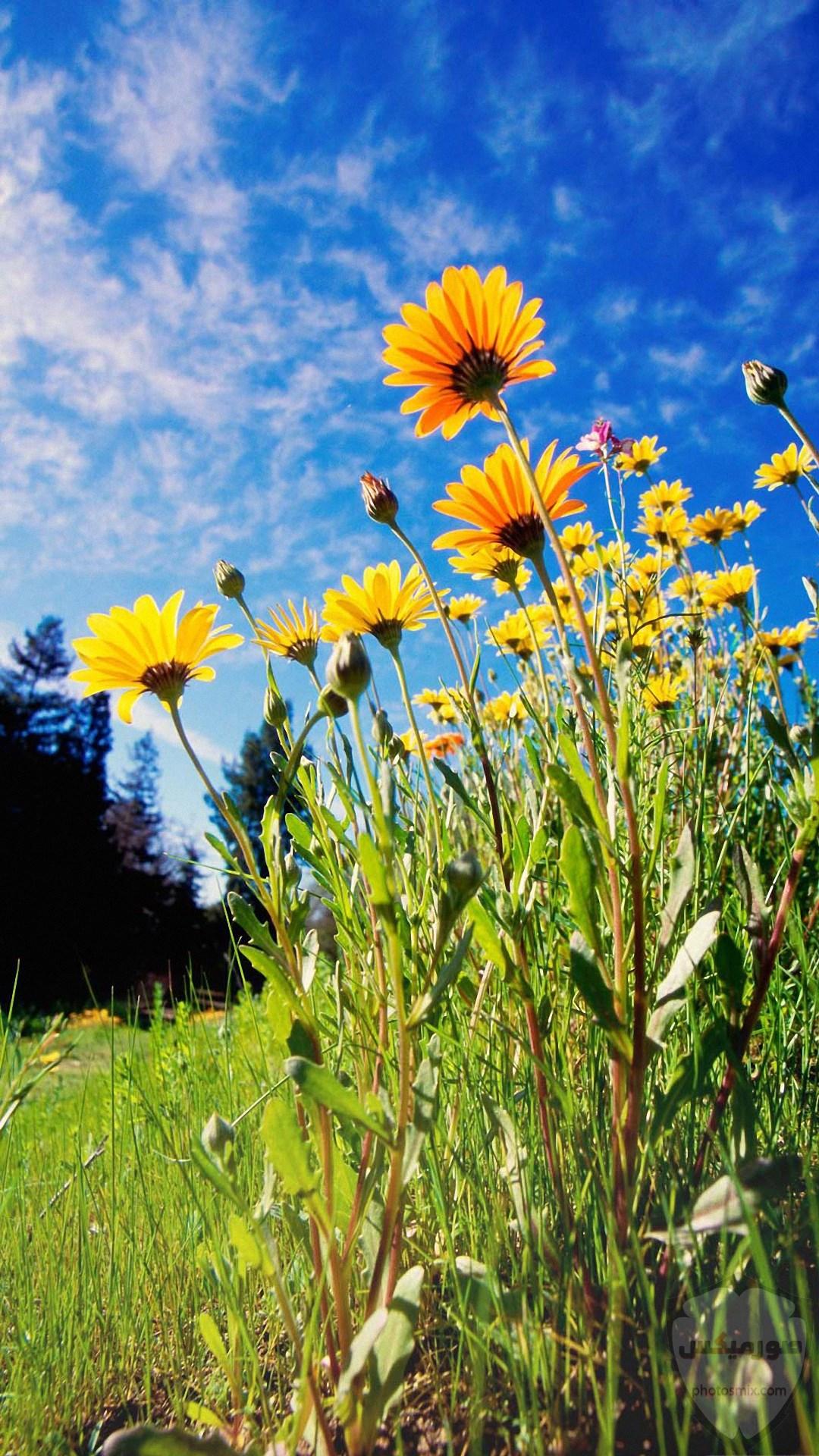 مكونات الطبيعة جمال الطبيعة فوائد الطبيعة صورمن الطبيعة 2