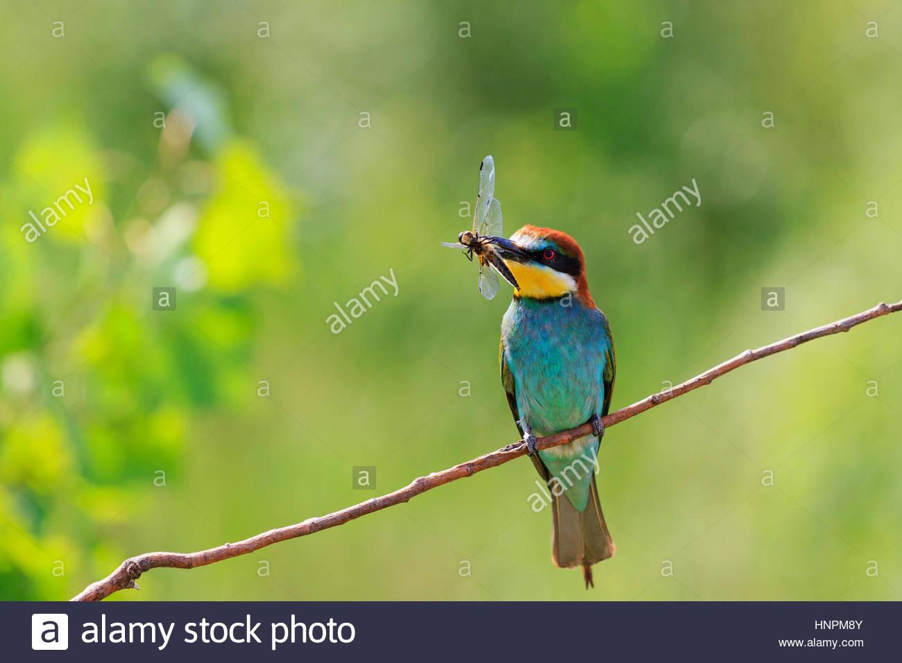 اجمل الطيور في العالم 10