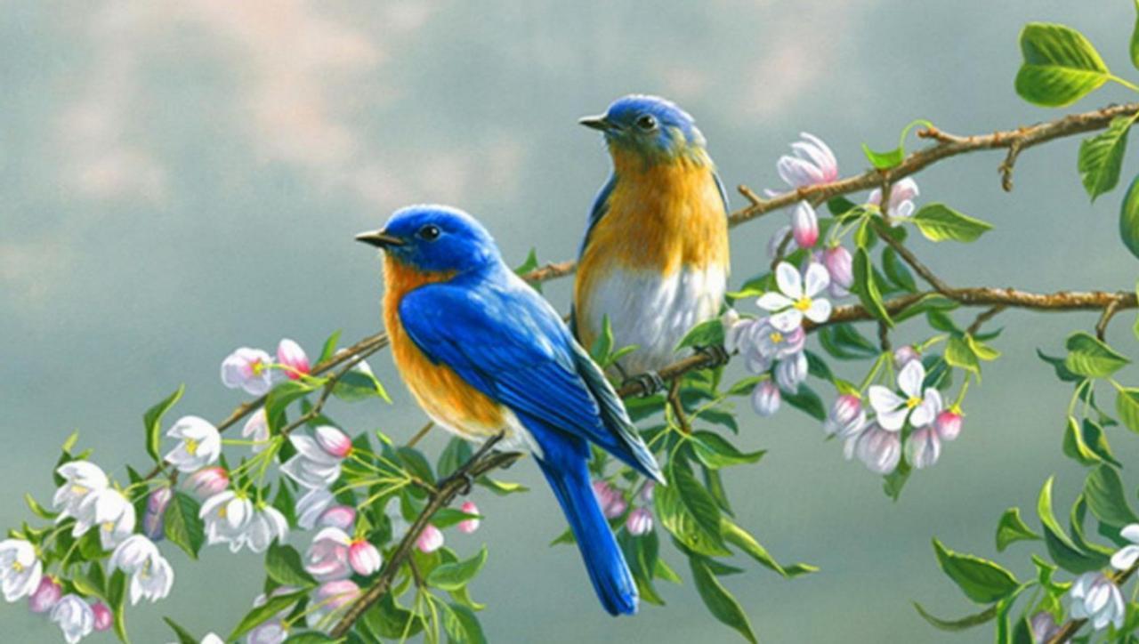 اجمل الطيور في العالم 11