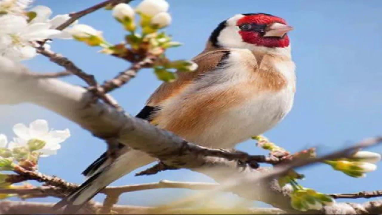 اجمل الطيور في العالم 12