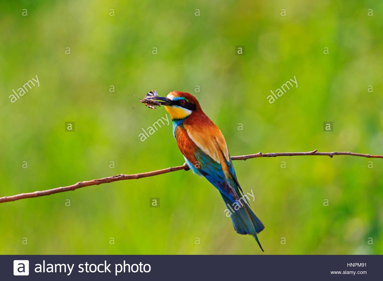 اجمل الطيور في العالم 13