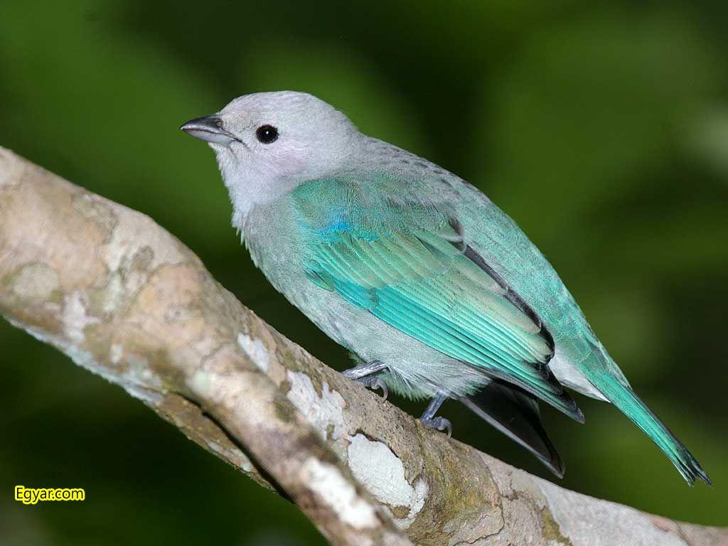 اجمل الطيور في العالم 15