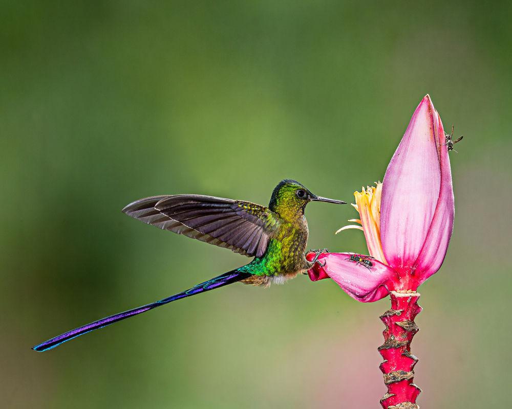 اجمل الطيور في العالم 16