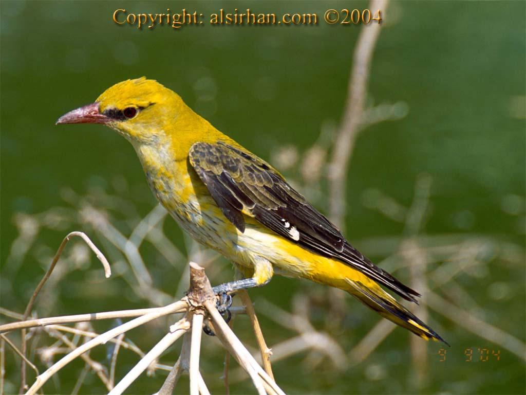 اجمل الطيور في العالم 17