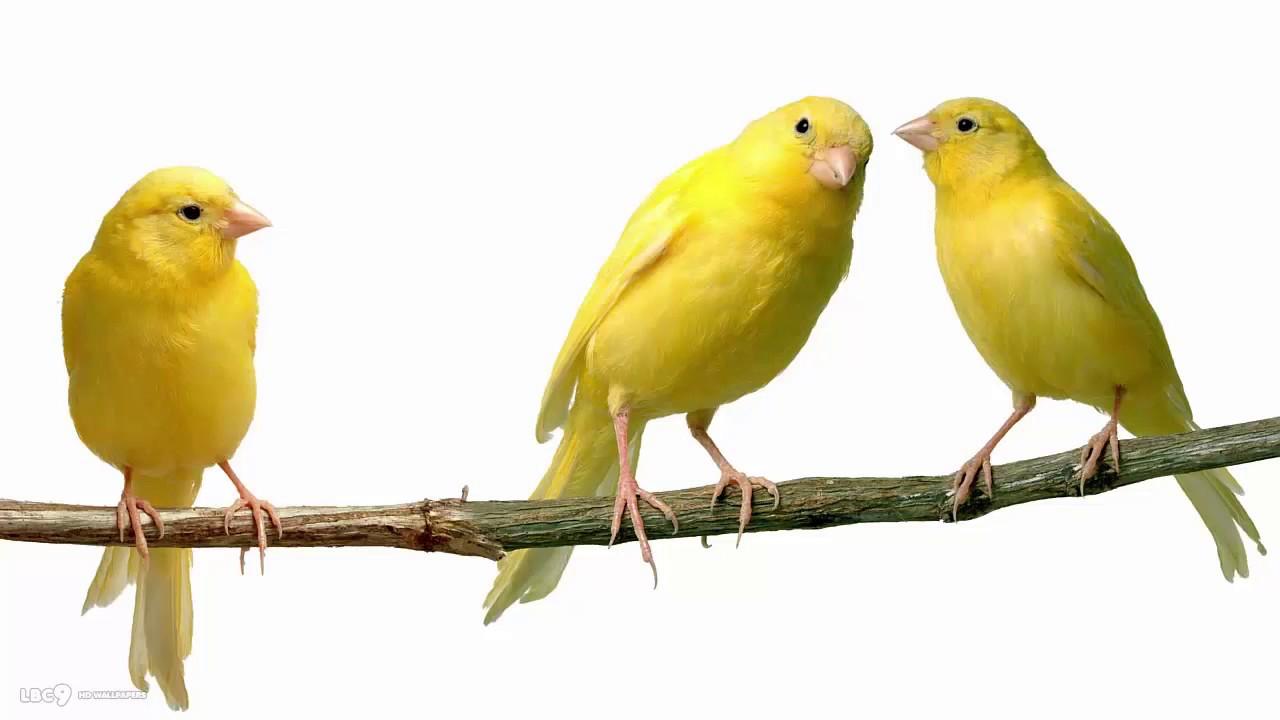 اجمل الطيور في العالم 18