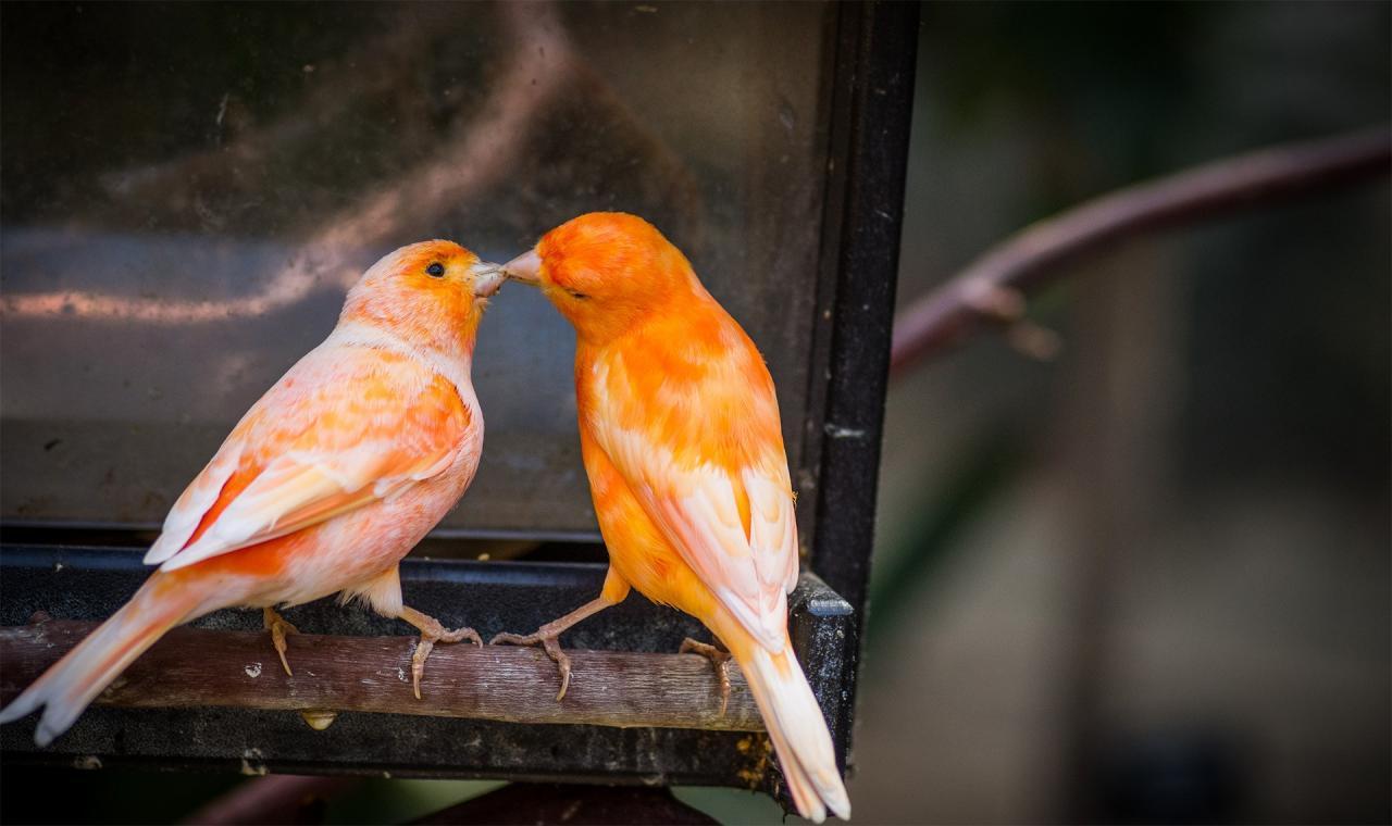 اجمل الطيور في العالم 19