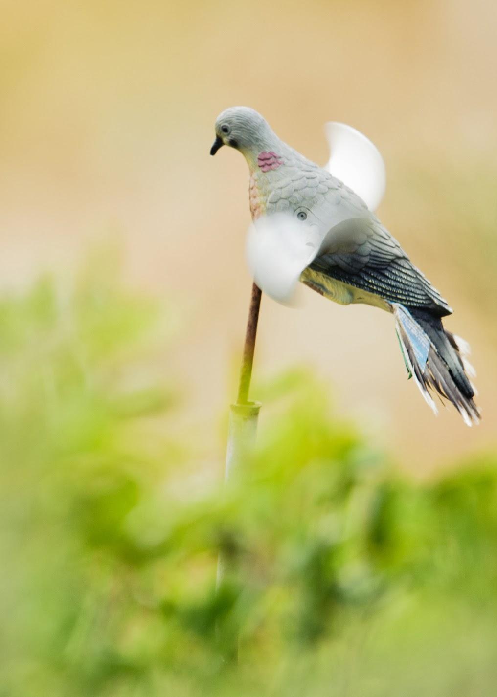اجمل الطيور في العالم 2
