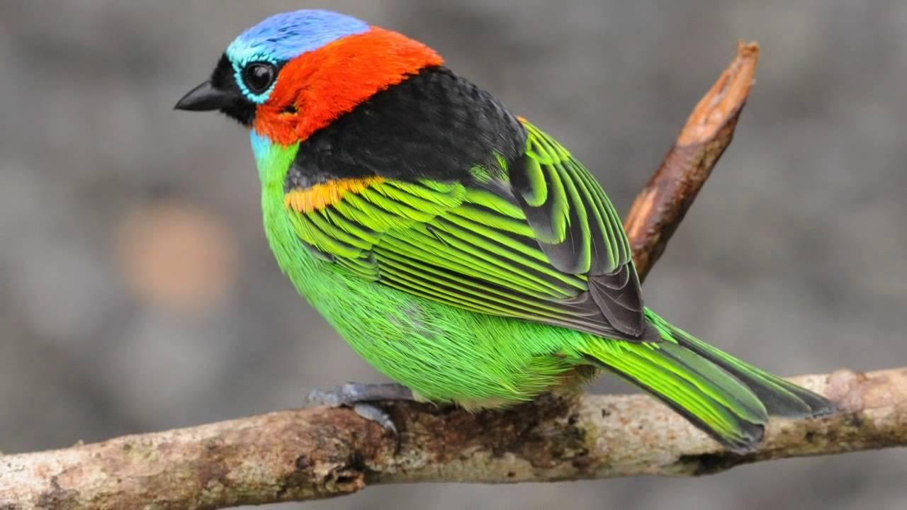اجمل الطيور في العالم 20