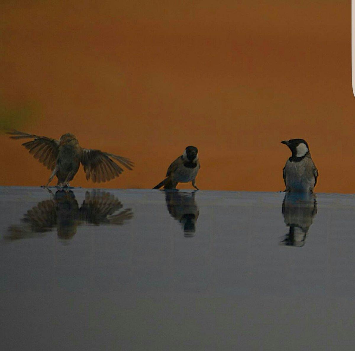 اجمل الطيور في العالم 21
