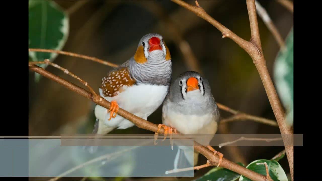 اجمل الطيور في العالم 22