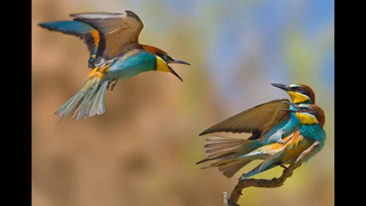 اجمل الطيور في العالم 23
