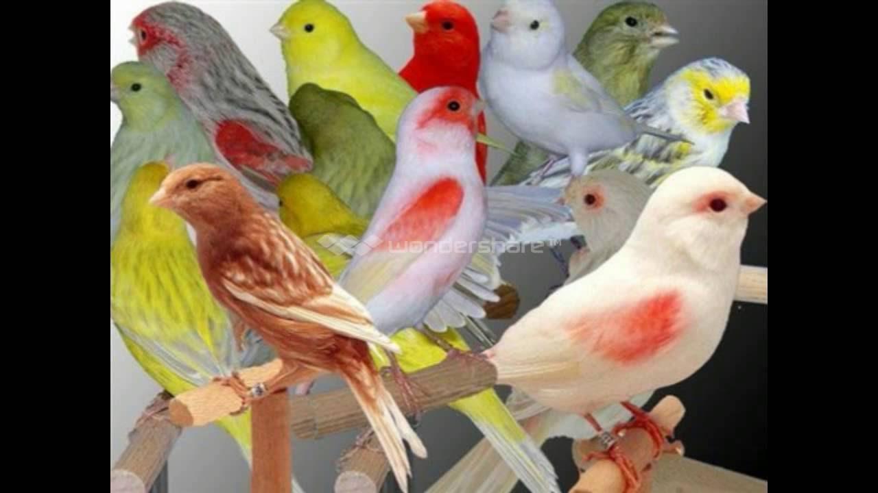 اجمل الطيور في العالم 24