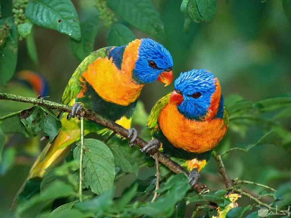 اجمل الطيور في العالم 25