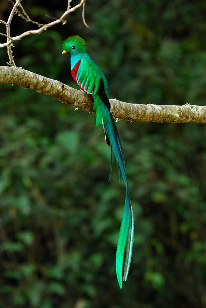 اجمل الطيور في العالم 26