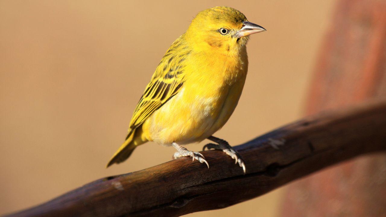 اجمل الطيور في العالم 27