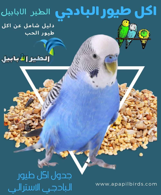 اجمل الطيور في العالم 28