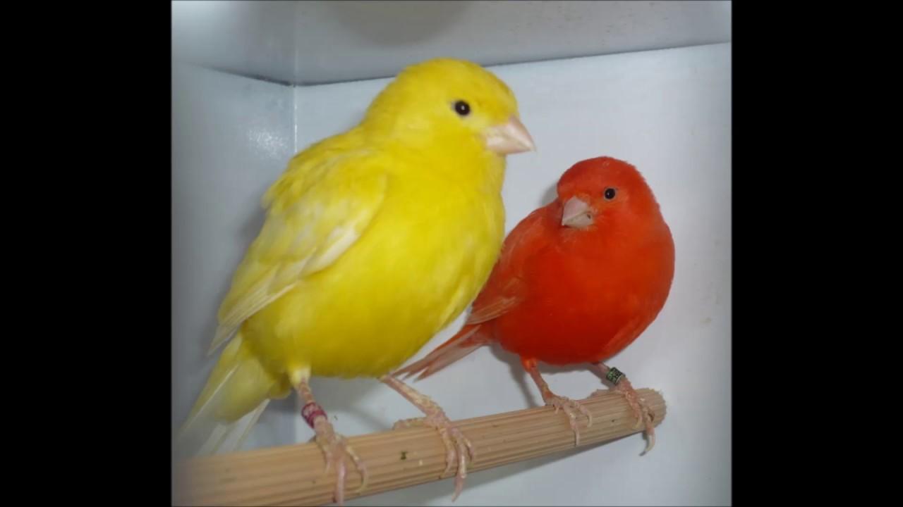 اجمل الطيور في العالم 29