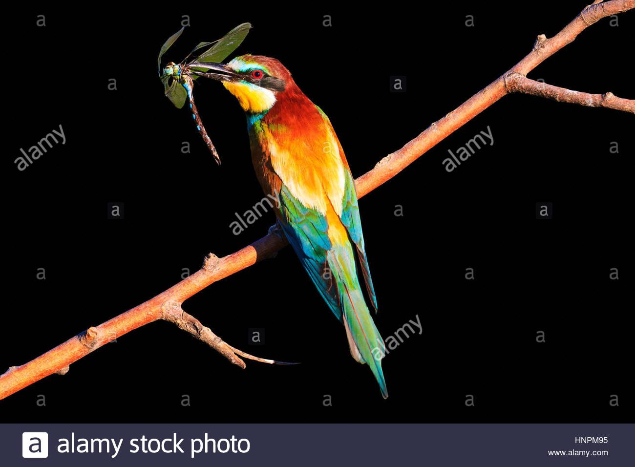 اجمل الطيور في العالم 3