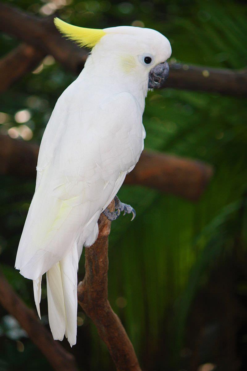 اجمل الطيور في العالم 30