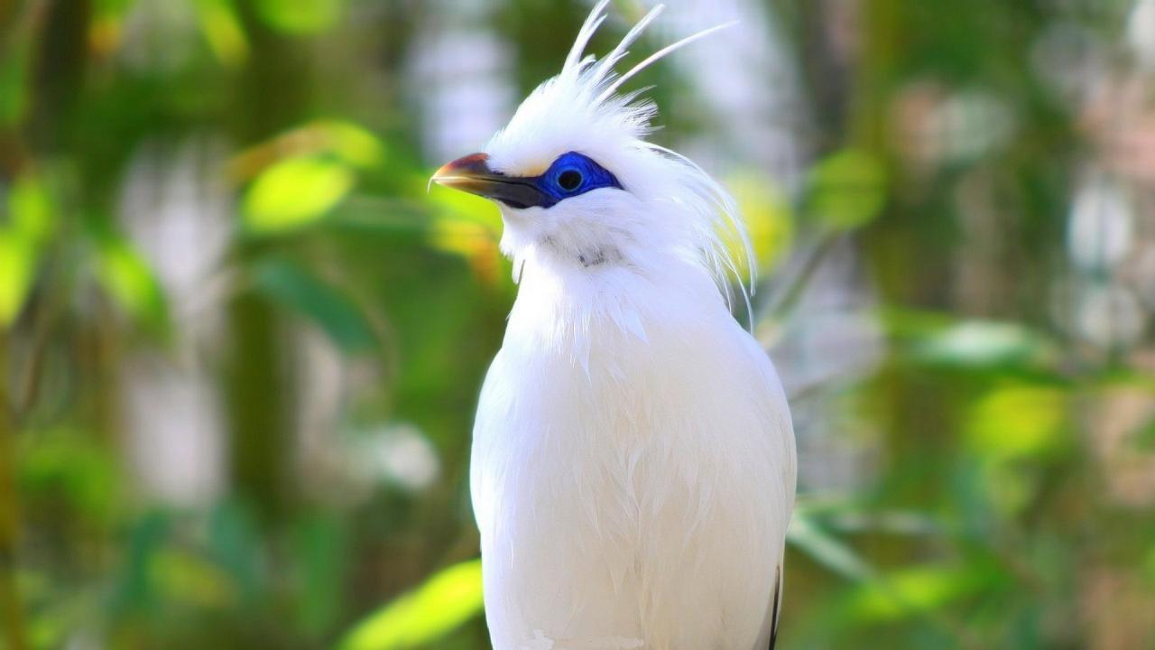 اجمل الطيور في العالم 31