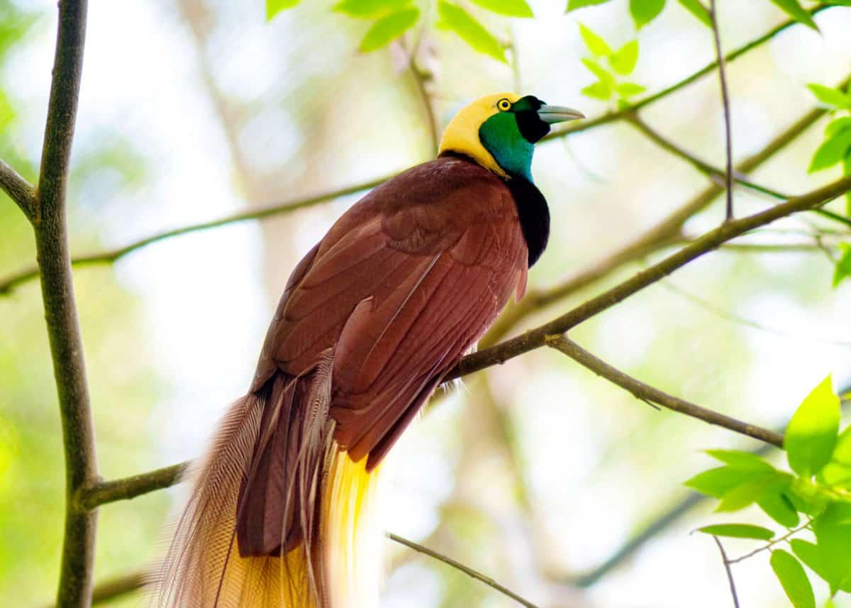 اجمل الطيور في العالم 32