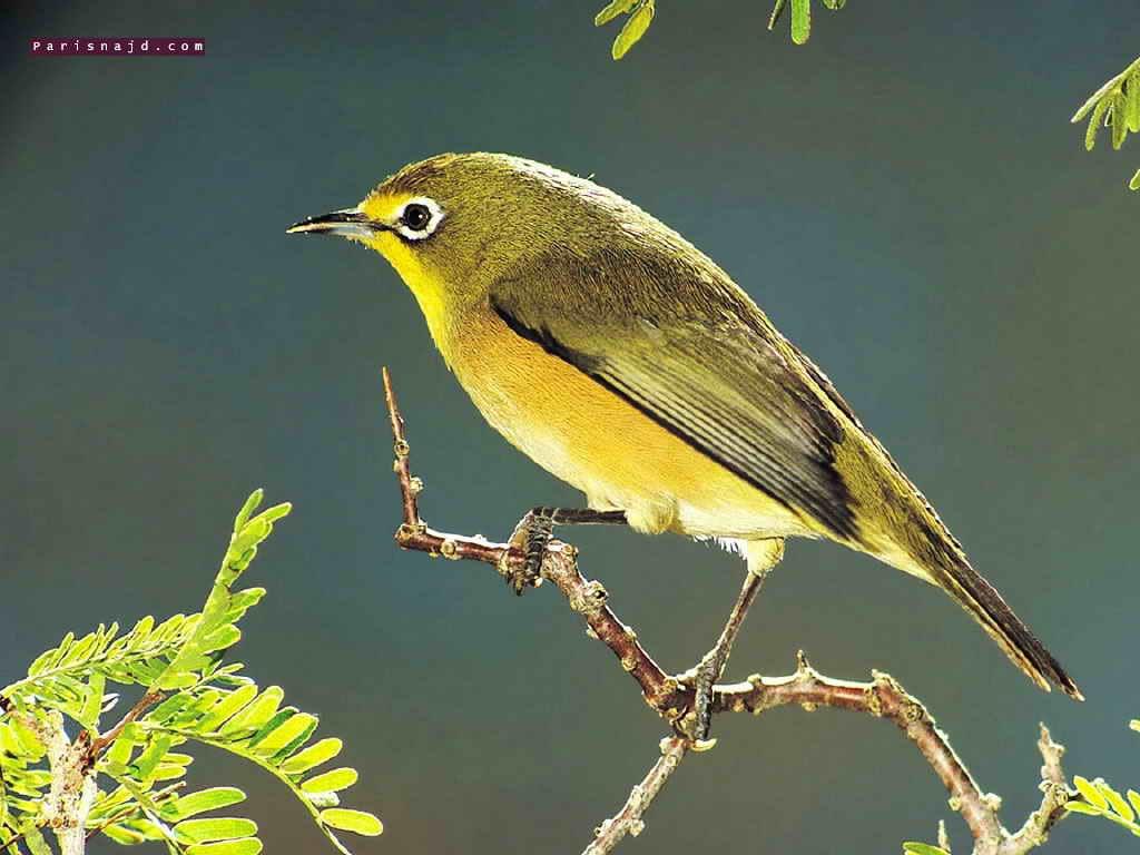 اجمل الطيور في العالم 34