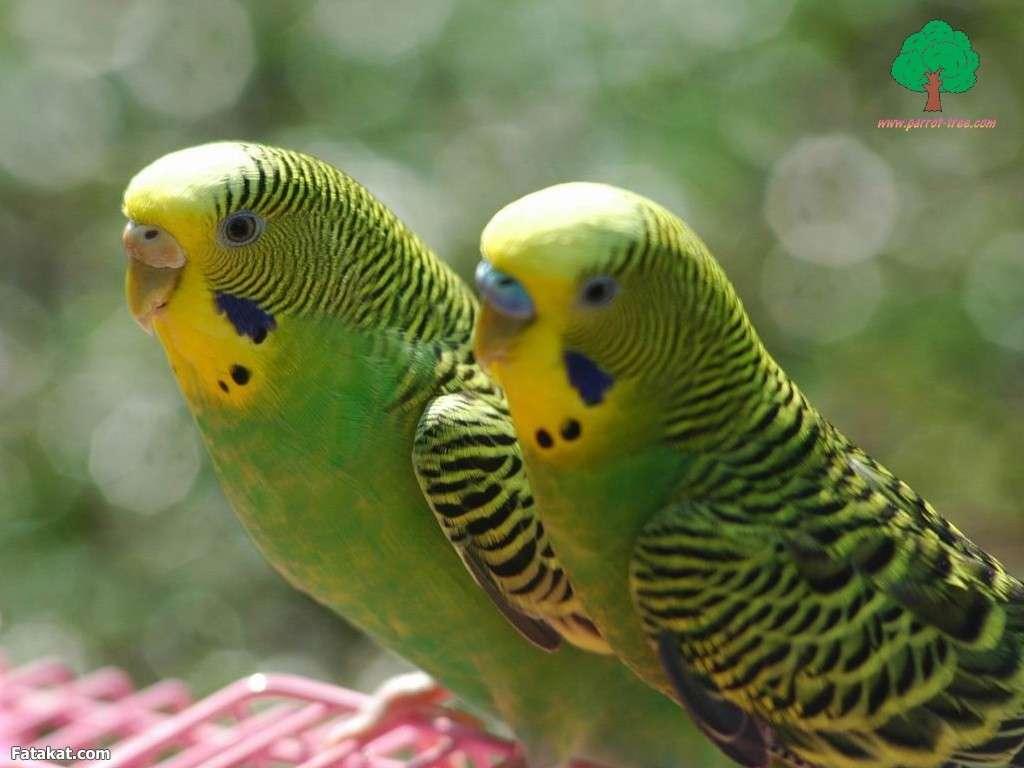 اجمل الطيور في العالم 35