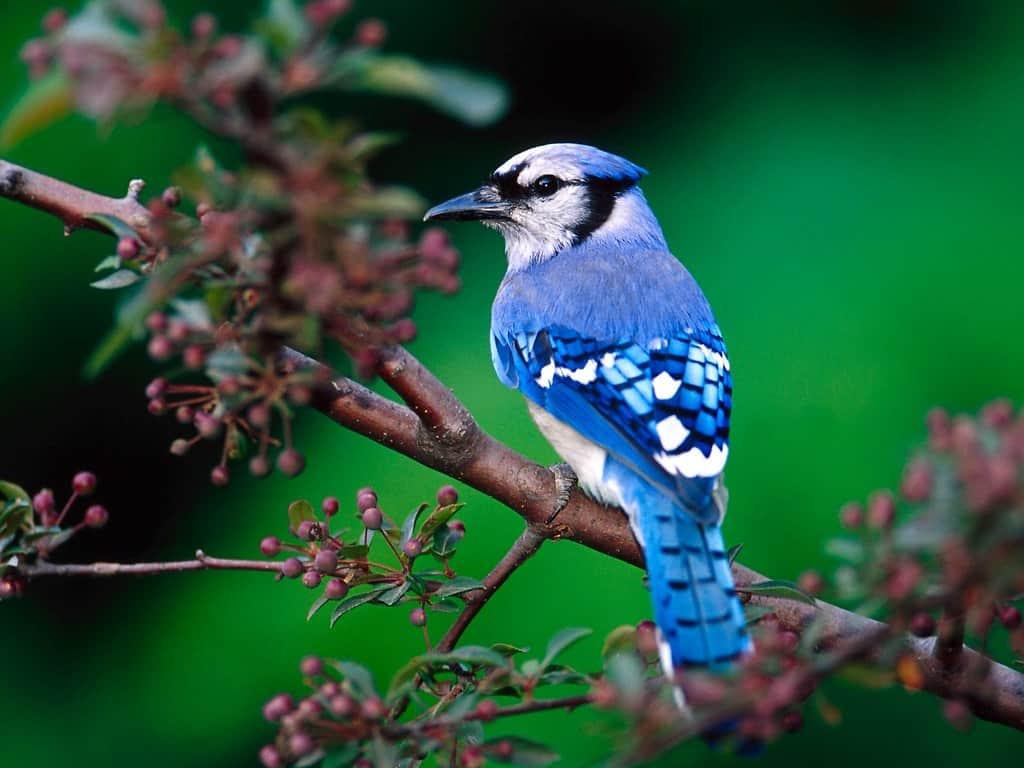 اجمل الطيور في العالم 36