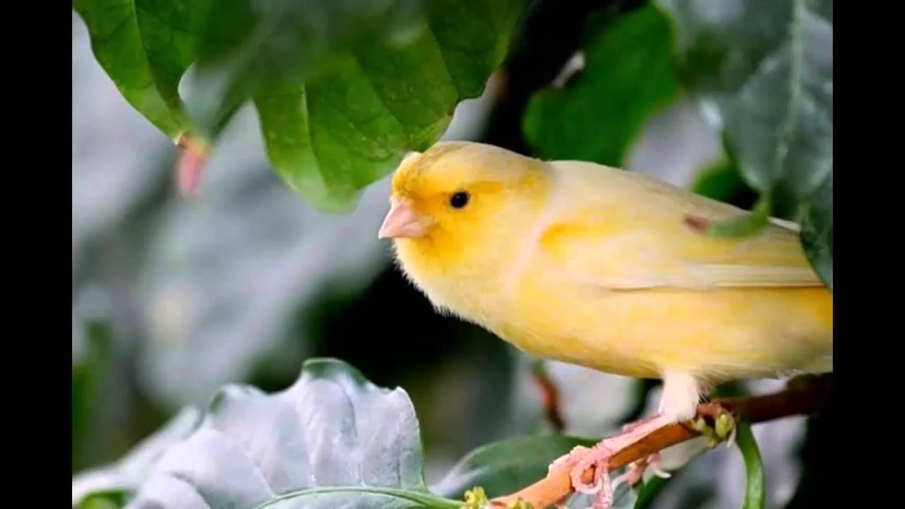 اجمل الطيور في العالم 37