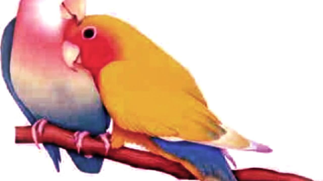 اجمل الطيور في العالم 38