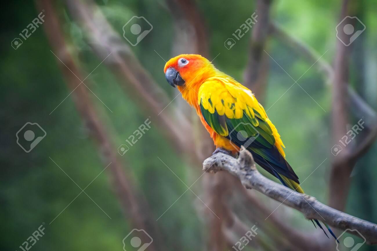 اجمل الطيور في العالم 4