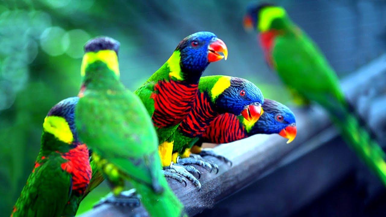 اجمل الطيور في العالم 5