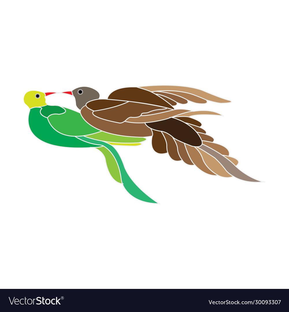 اجمل الطيور في العالم 6